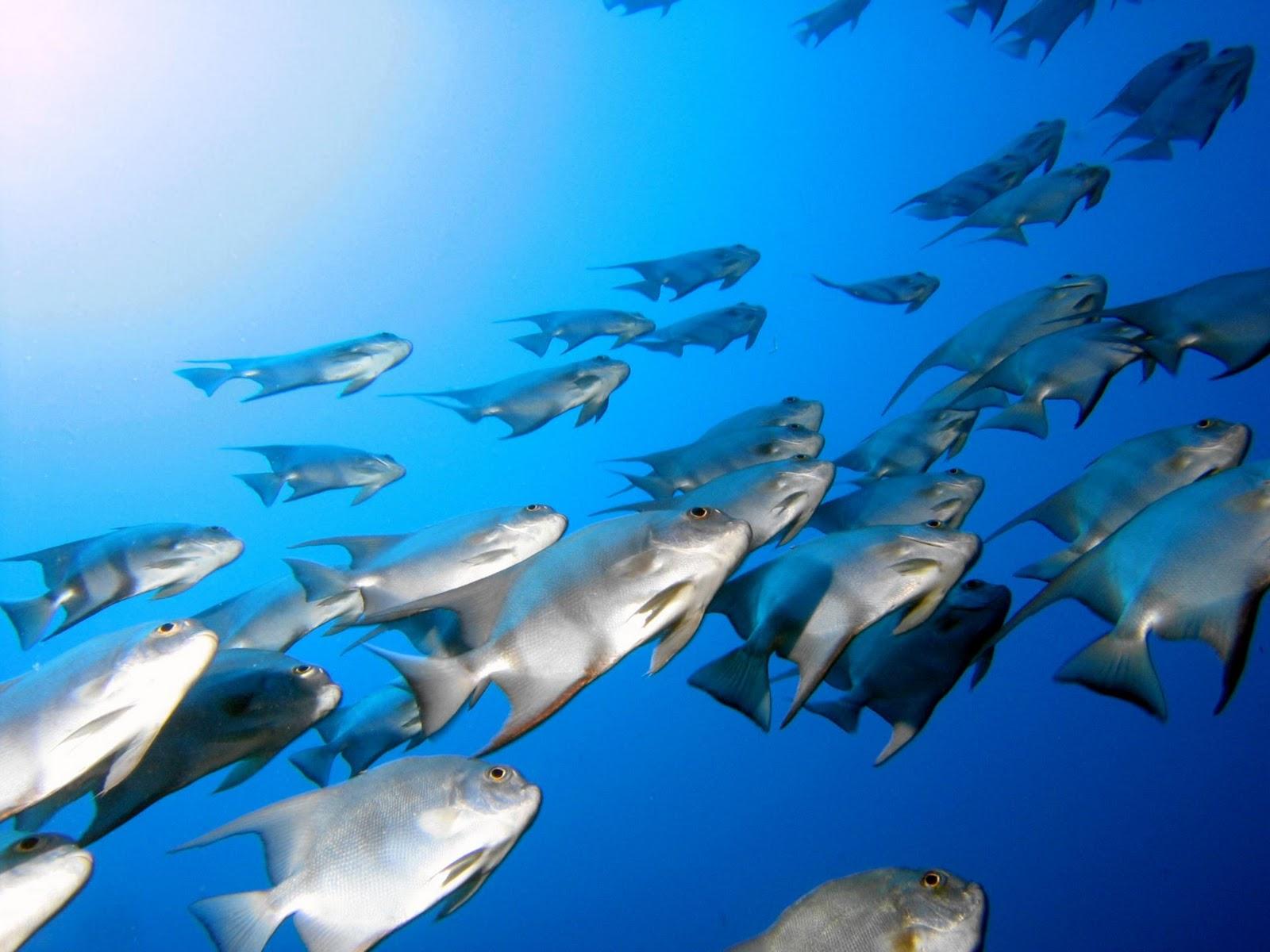 Free hd Wallpapers: Beautiful Sea World HD Natural Wallpapers