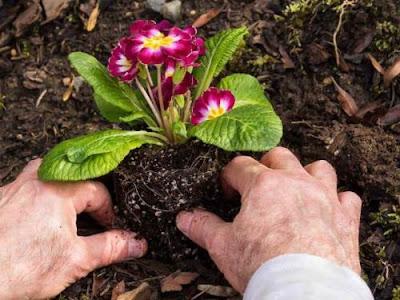 Чи можна садити рослини літом