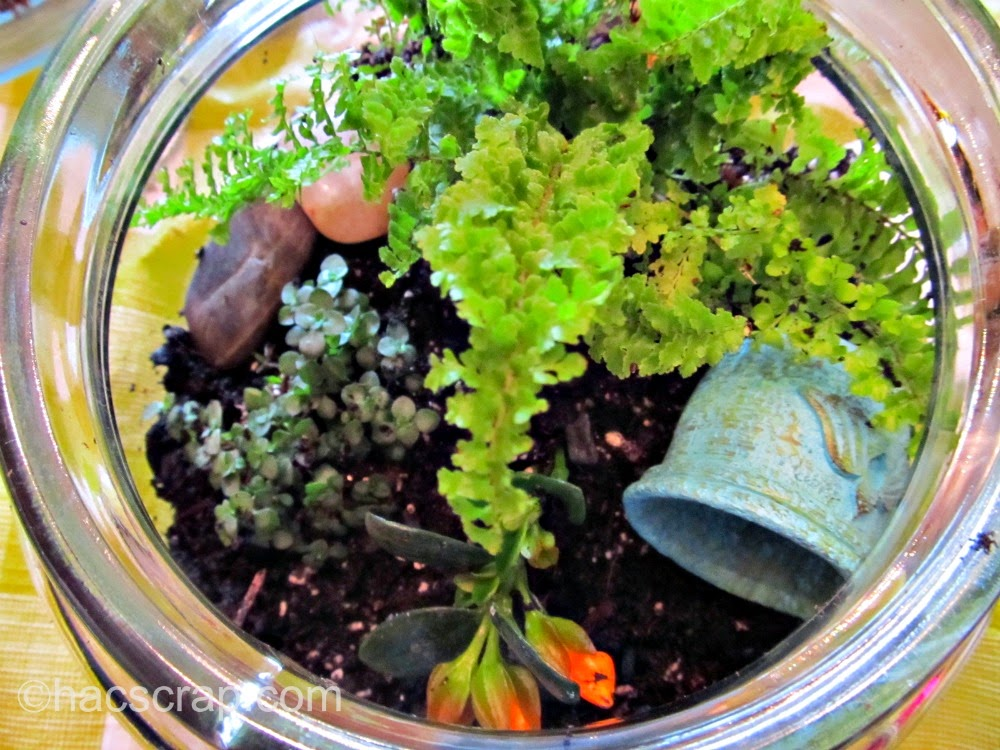 DIY Completed Glass Jar Terrarium