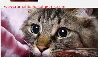 Contoh Descriptive Text About Cat Dan Artinya Terbaru Rumah