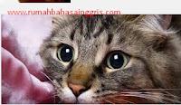 Contoh Descriptive Text About Cat Dan Artinya Terbaru