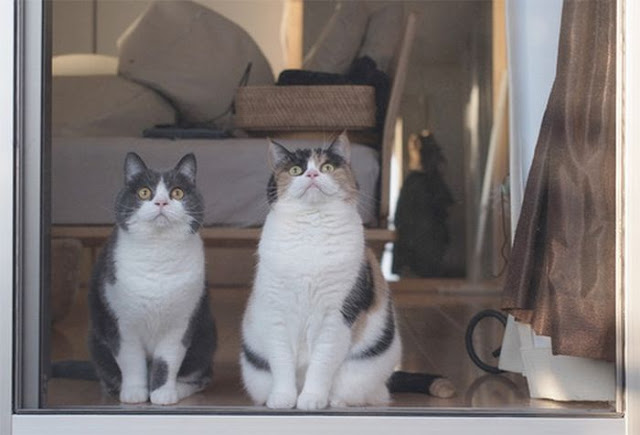 Kucing Yang Sangat Melucukan 5 Gambar  Pen Canggih