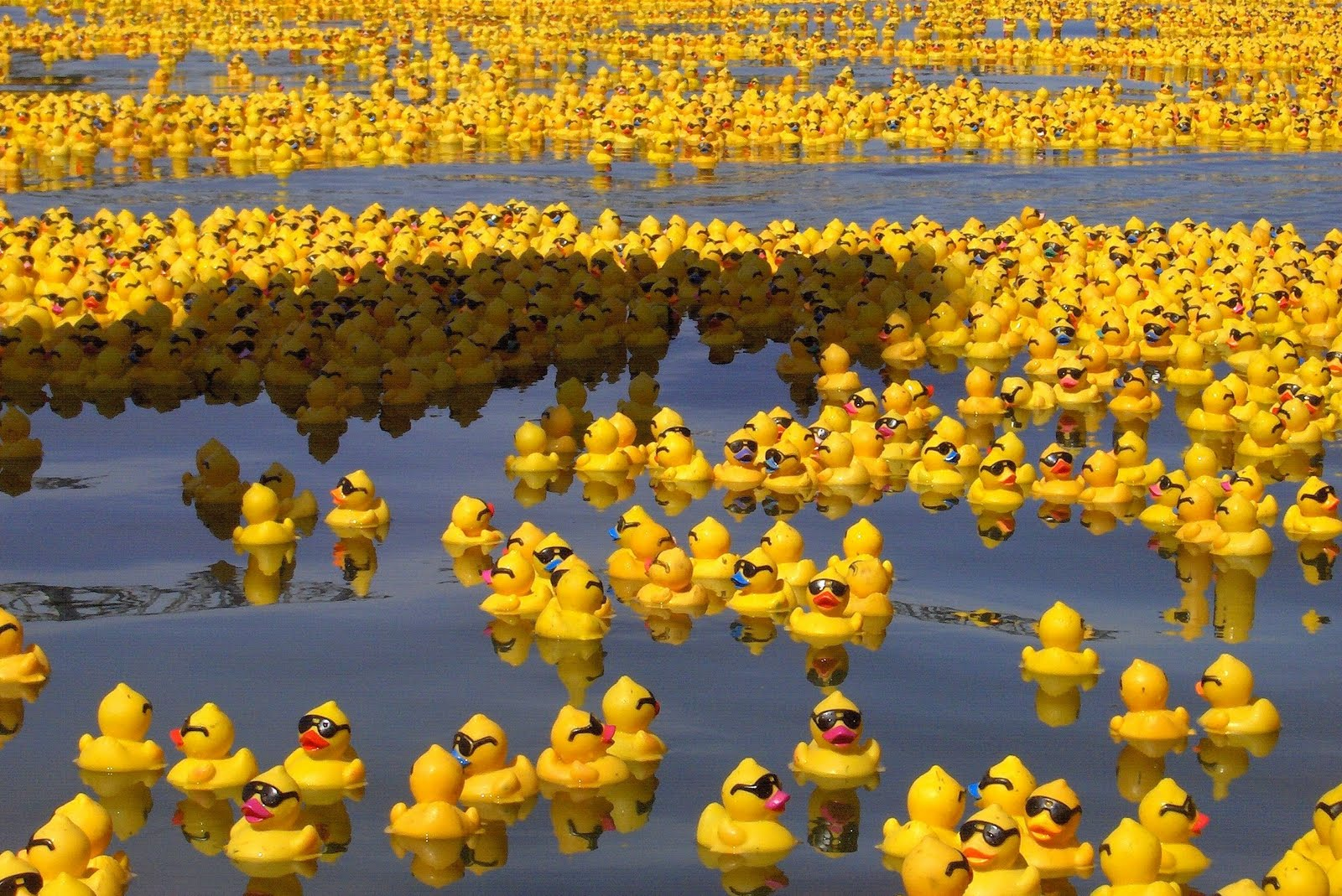 Every Day Is Special January 13 2013 Rubber Duckie Day