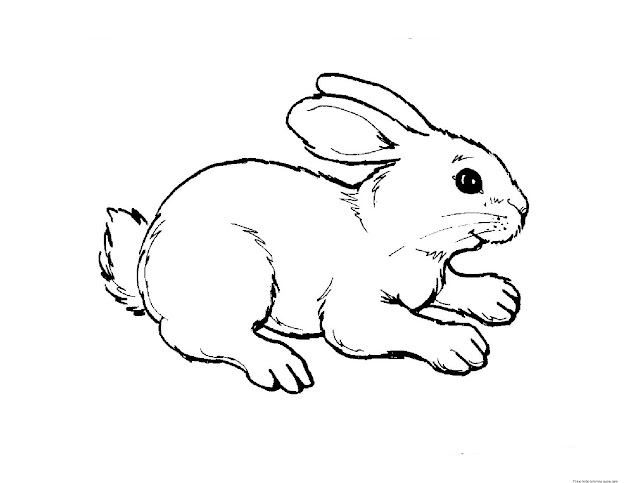 Rabbit On Table Coloring Page From Rabbits Category Select From   Printable Crafts Of Cartoons Nature Animals Bible And Many More