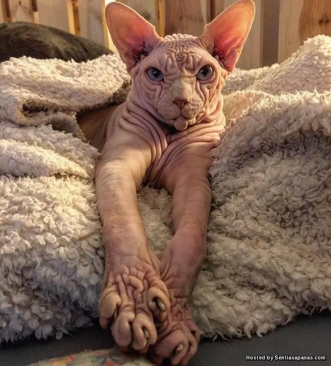Kucing Berkedut Jadi Selebriti Di Instagram