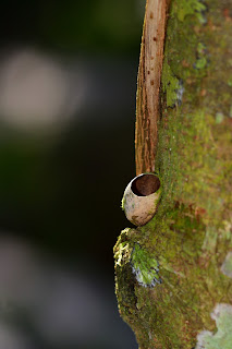 Insect Nest Vessel