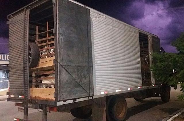 Animais parados na Fernão Dias em MG foram colocados em outros veículos (Foto: Polícia Rodoviária Federal)