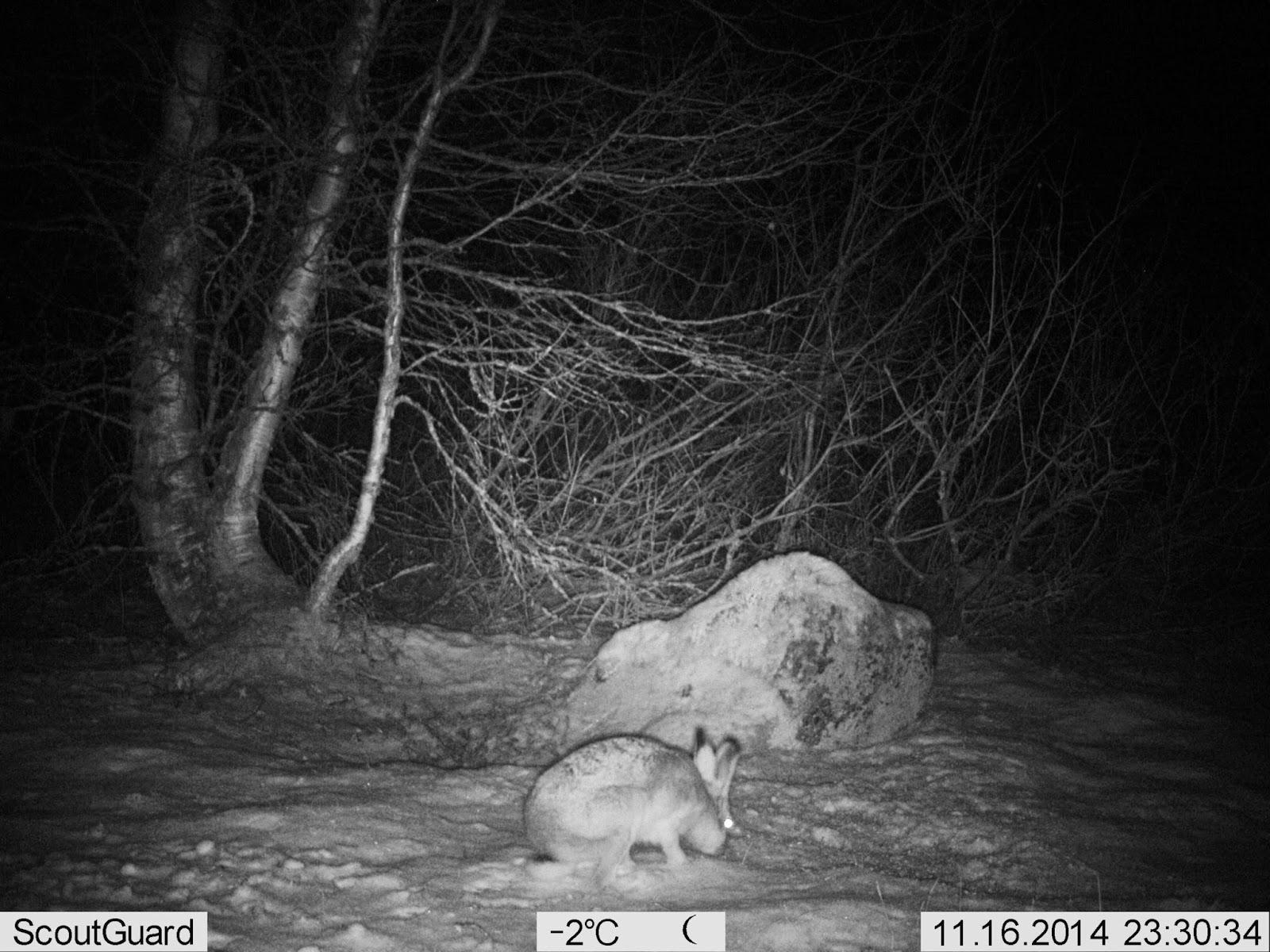 jäniksen metsästys koiralla