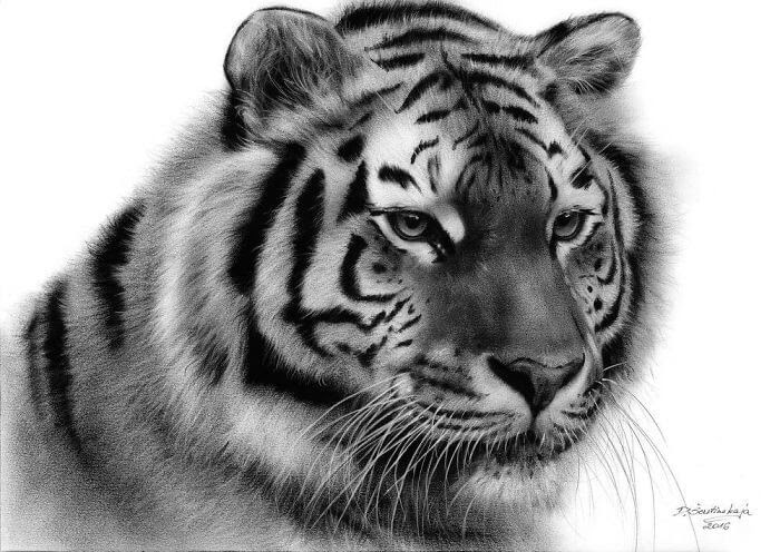 04-Tiger-Danguole-Serstinskaja-Animal-Dry-Brush-Technique-Paintings-www-designstack-co