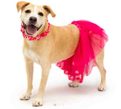Where Can I Adopt A Dog In Orange County