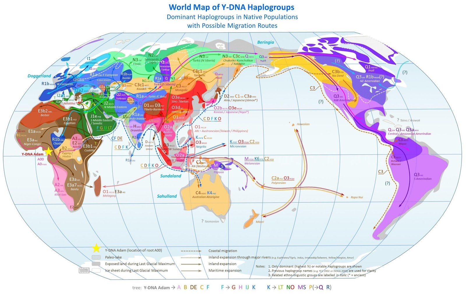 World map of Y-DNA Haplogroups with possible migration routes