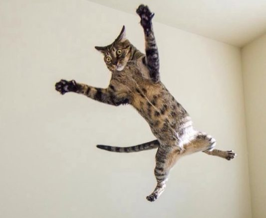 Flying ninja cat