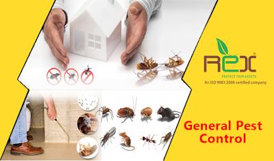 شركة مكافحة حشرات بالمدينة المنورة ورش المبيدات الحشرية