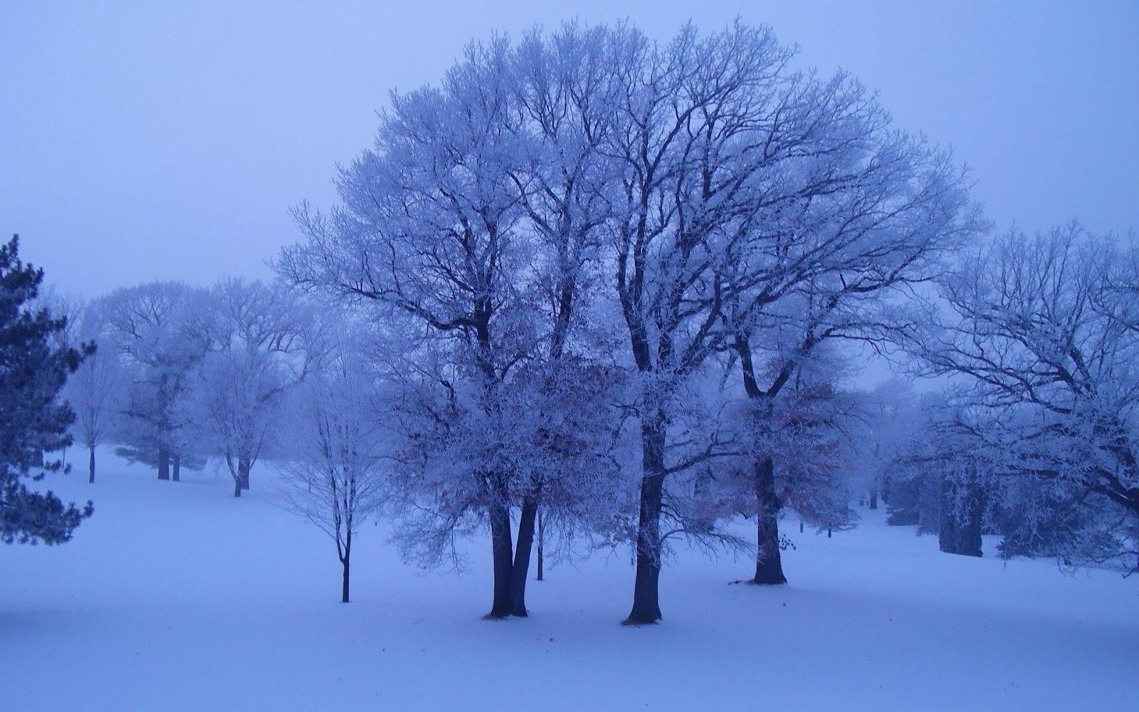 s1600 winter achtergronden winter - photo #20