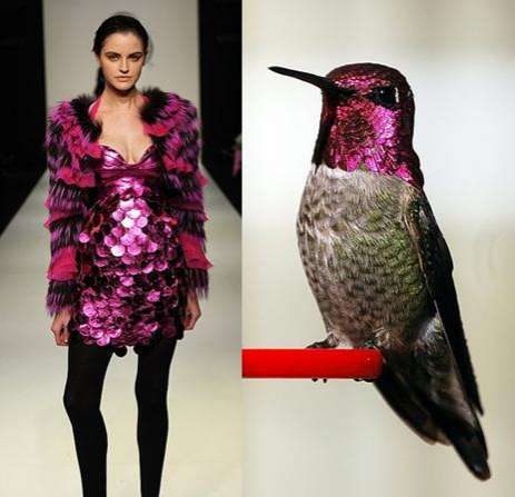 Breeze Me Nature Inspired Fashion The Birds Of Paradise