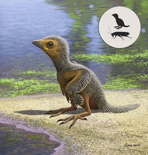 127-million-year-old baby bird fossil sheds light on avian evolution
