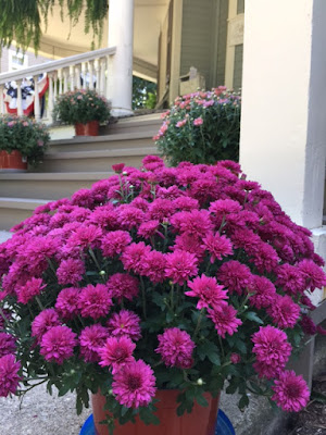 Purple and pink chrysanthemums in bloom on front porch steps with patriotic bunting and white column in the background