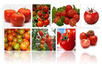 Khasiat Dan Manfaat  Buah Tomat