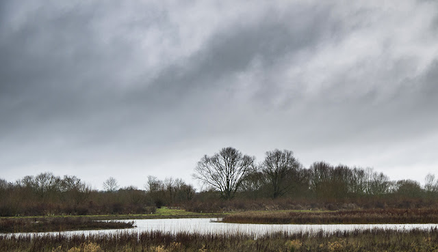 Dark Skies over the Floodplain Forest Nature Reserve