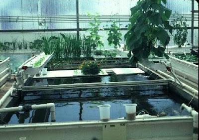 مشروع زراعة الأسماك مع النباتات فوق أسطح المنازل بالتفصيل