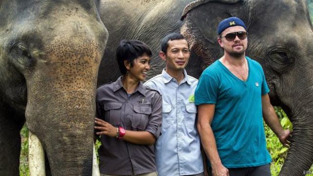Tidak Salah Leonardo DiCaprio Sikapi Kondisi Hutan Leuser Aceh, Toh Memang Buruk