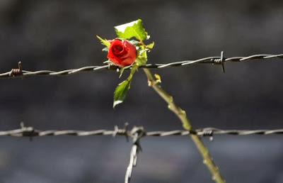 τριαντάφυλλο αγκάθια
