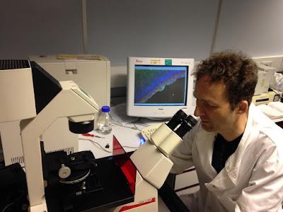 Prof. Steve Winder, University of Sheffield