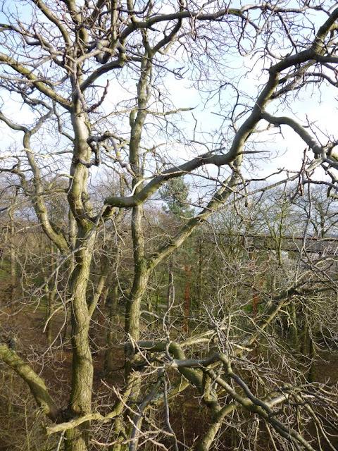 Kew Gardens Tree Canopy in January