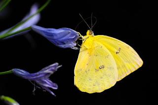 butterfly-1413678__340.jpg
