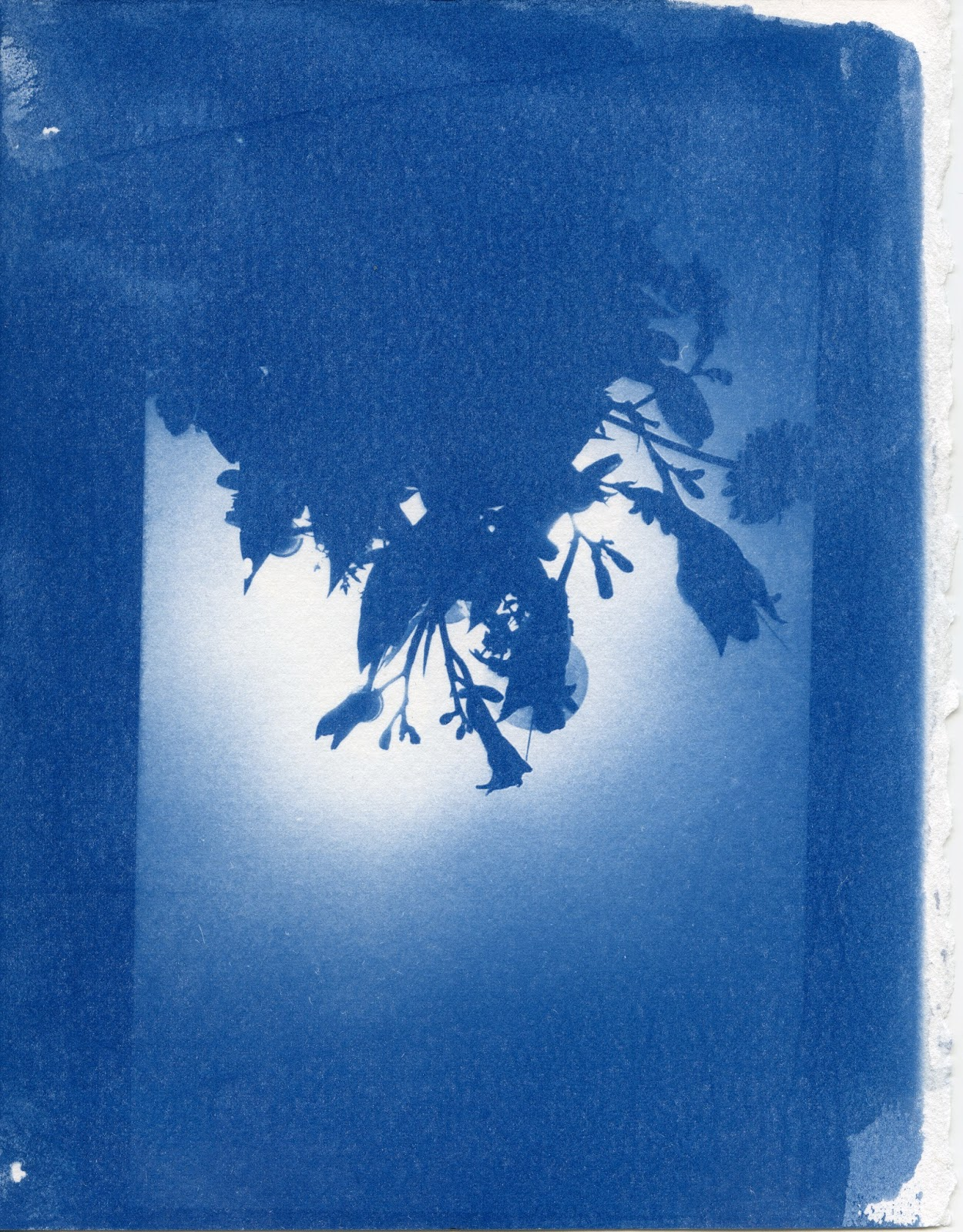 Patricia L Leonard Cyanotype and Cliché Verre