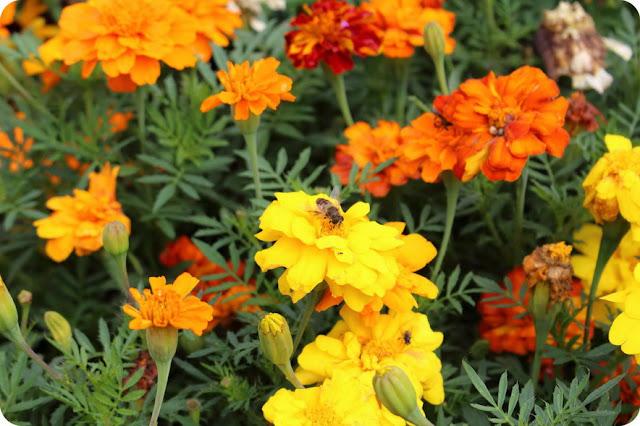 il mondo delle api per bambini