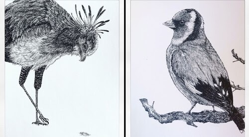 00-Bas-Geeraets-Black-and-White-Drawings-of-Birds-www-designstack-co