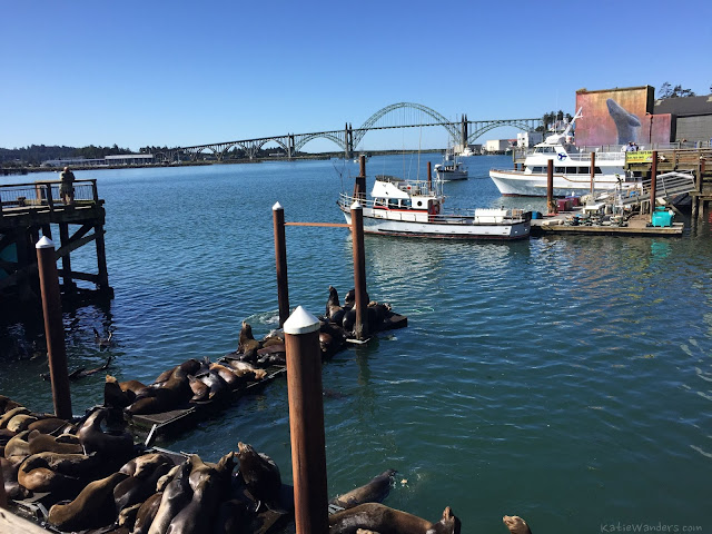 Katie wanders day 3 highway 101 to newport oregon for Newport oregon fishing charters