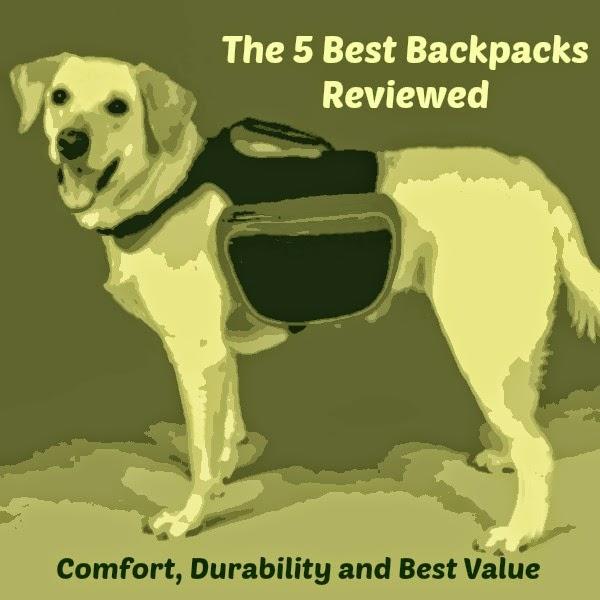 Find Your Ideal Dog Backpack 5 Best Dog Backpacks Reviewed