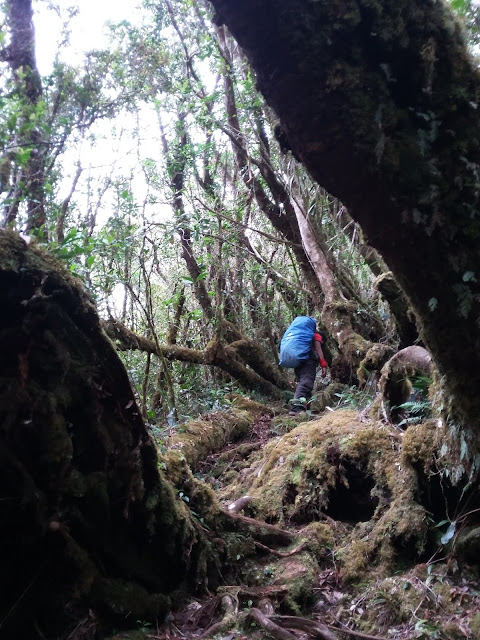 Mt. Amuyao Mossy Forest