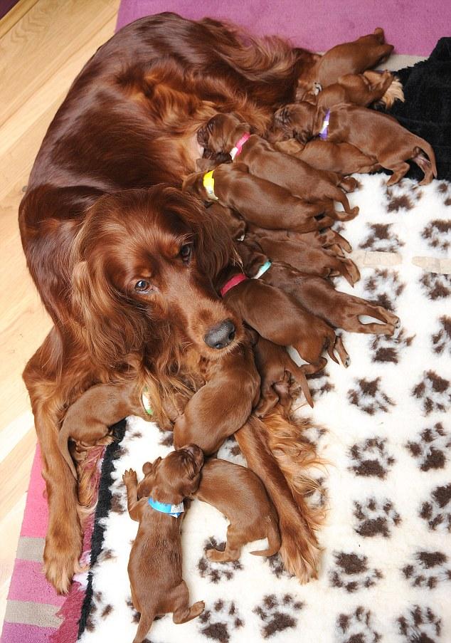 Feeding her pups - 2 4