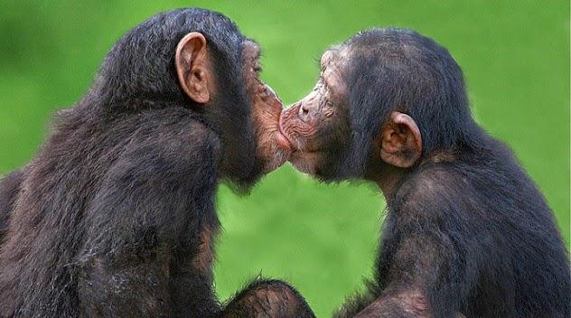 2. Shumë kafshë puthin më shumë se njerëzit