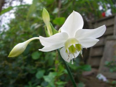 hình ảnh đẹp hoa ngọc trâm 2