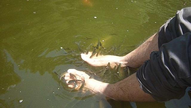 terapi ikan teras cikapundung bandung babakan siliwangi