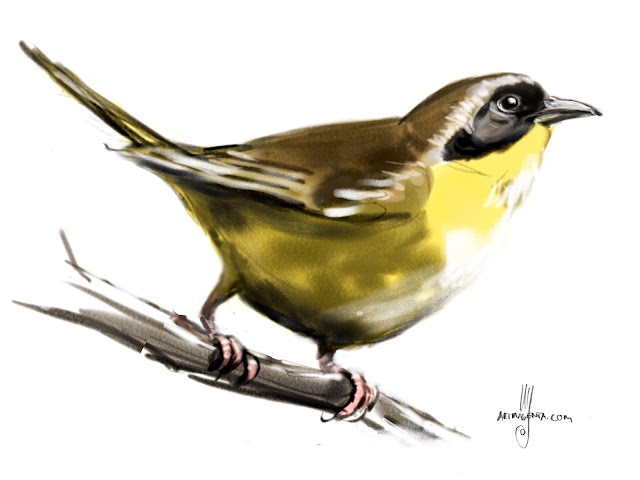 Common Yellowthroat bird painting by Artmagenta