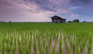 Peluang Bisnis Usaha Toko Pertanian Dengan Analisa Lengkap