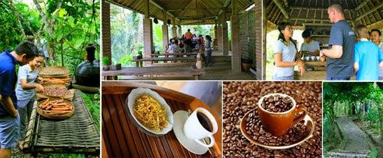 Coffee Plantation In Bali . Coffee Beans. Kopi Luwak Stock ...  Kopi Luwak Coffee Plantations