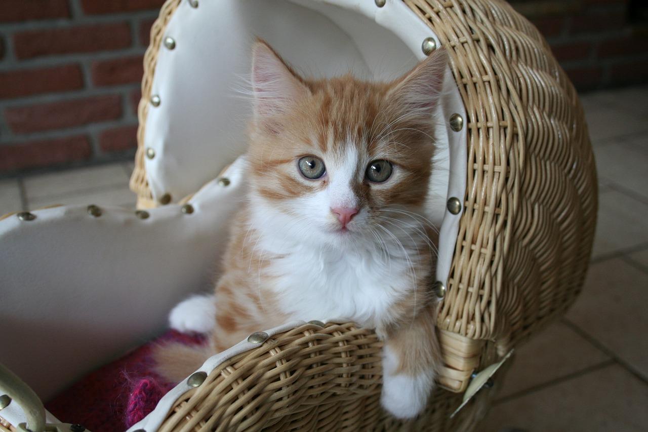 gambar kucing sedih