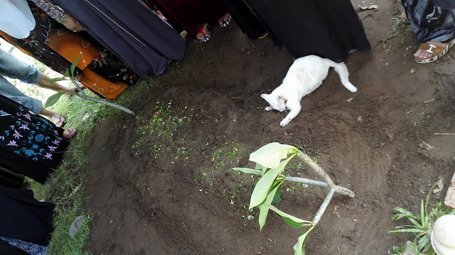 Seekor Kucing Putih Tiba-Tiba Datang di Pemakaman Sambil Garuk-garuk Tanah, Kisahnya Bikin Orang-Orang Terharu