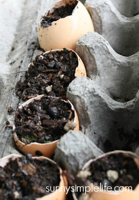 seed starting in eggshells
