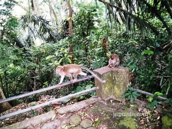 taman wisata hutan kera