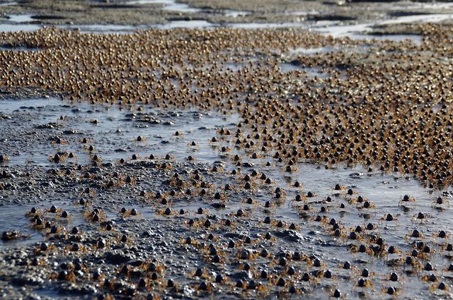Crabs on Stradbroke Island