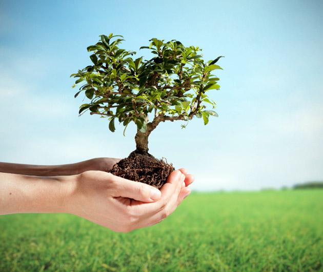 Buy Books, Plant Trees