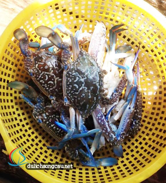 Ghẹ đốm Sông Cầu tươi ngon, thịt chắc. Ảnh: FB Thị xã Sông Cầu - Phú Yên