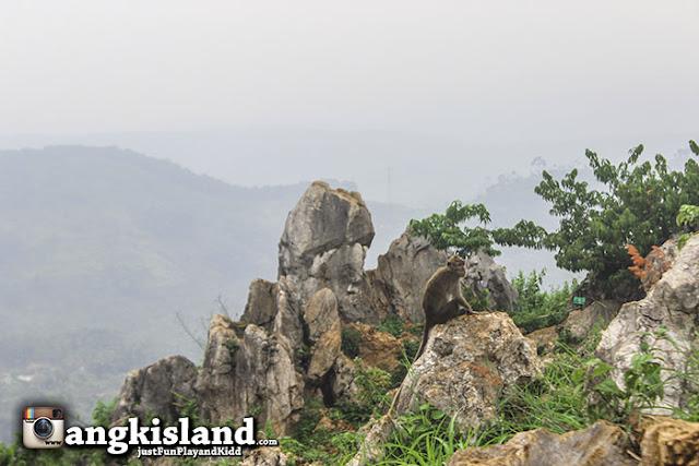 monyet stone garden